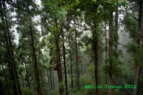高尾山吊车-沿路风景,都是耸高的树儿